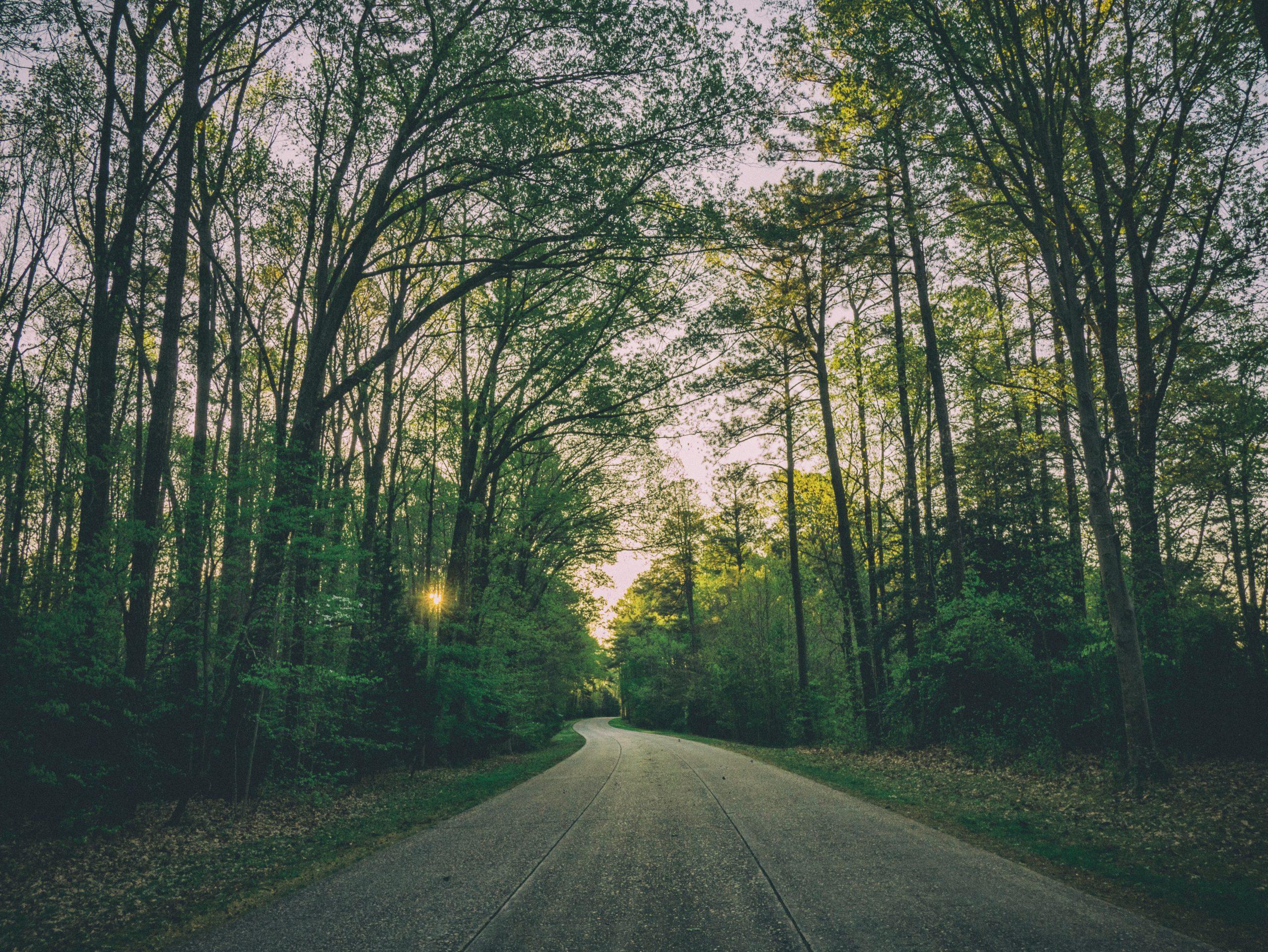 williamsburg virginia road through the canopy of trees