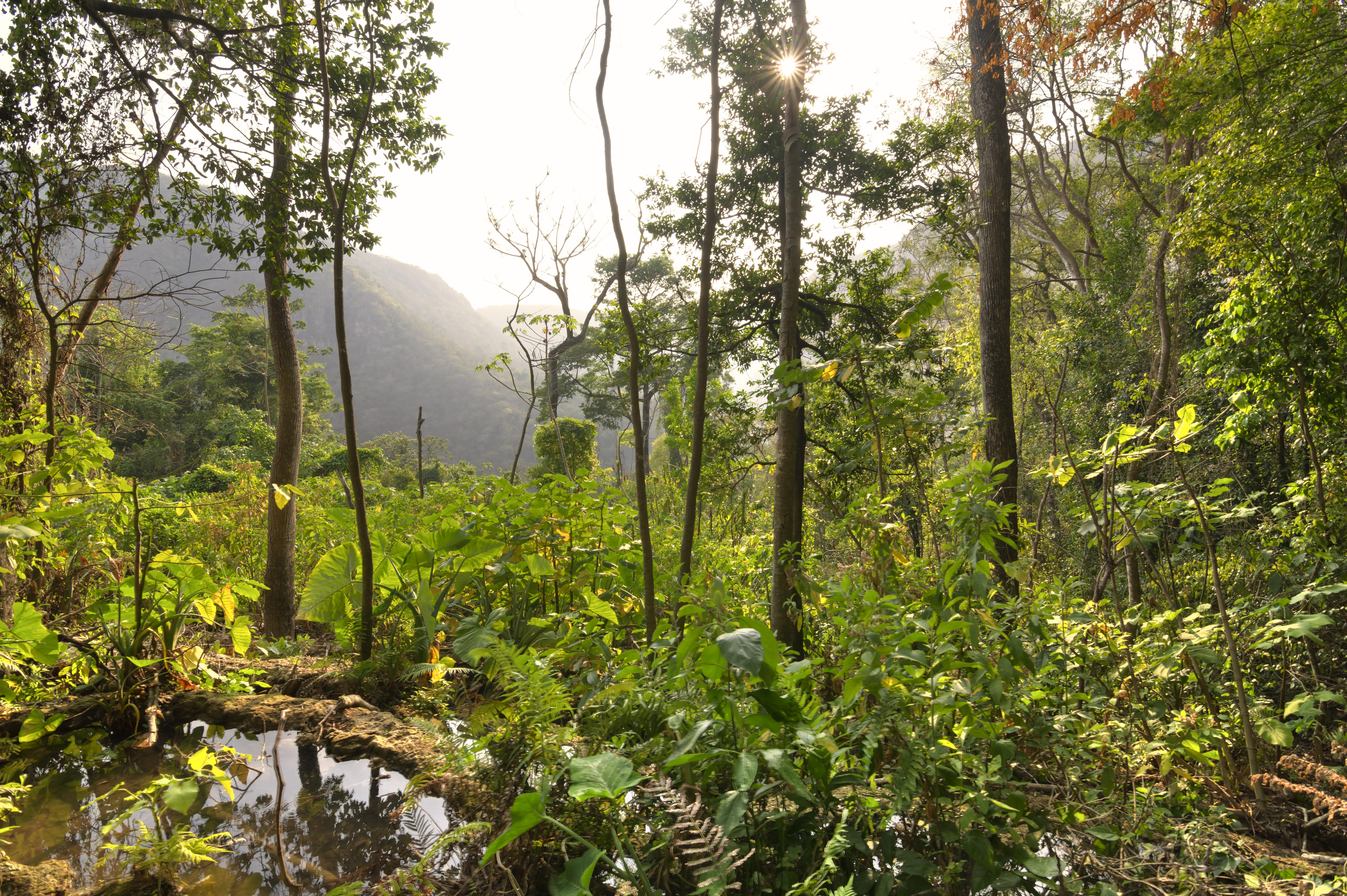 dense jungle vegetation under hazy afternoon sun in Chiapas, Mexico
