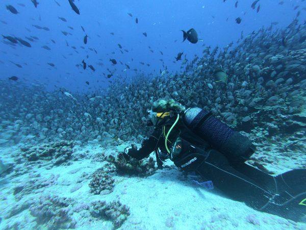 woman scuba diving destinations on west coast of mexico