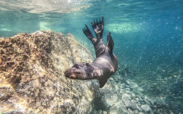 animal encounters with seals in mexico