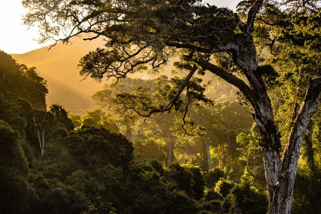 sunset behind the trees - Daily Rituals to Boost Your Immunity