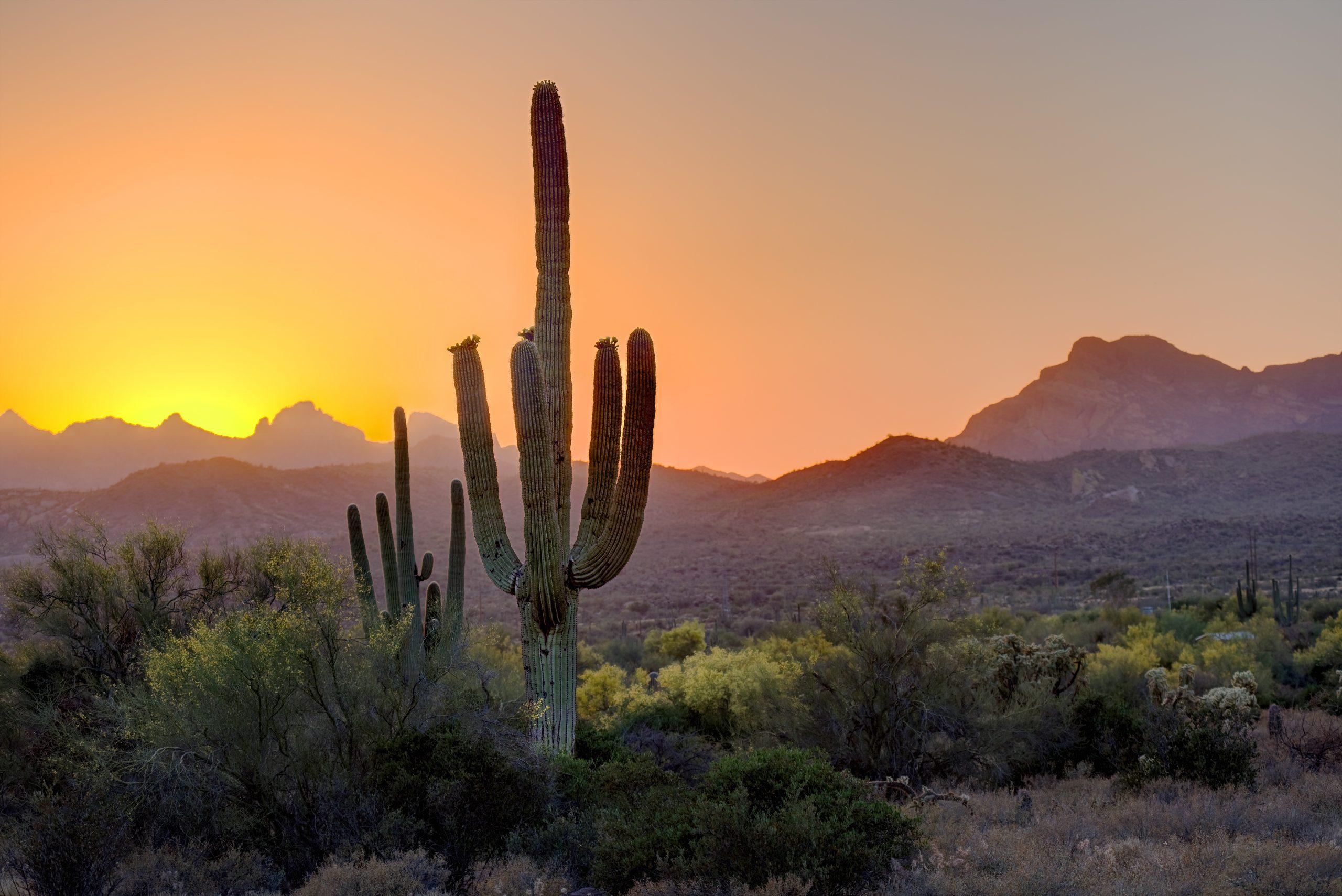 Canyon Ranch Tucson Desert