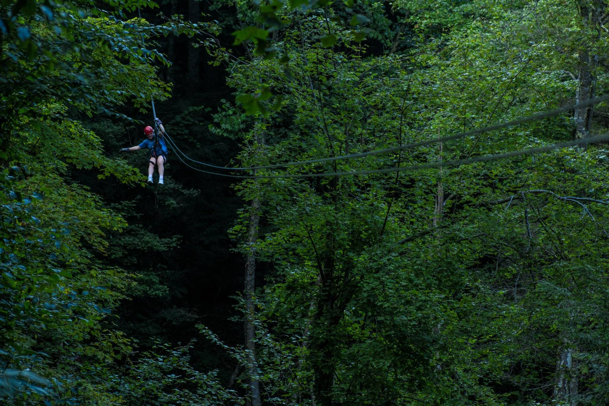 Adventures on the Gorge treetops