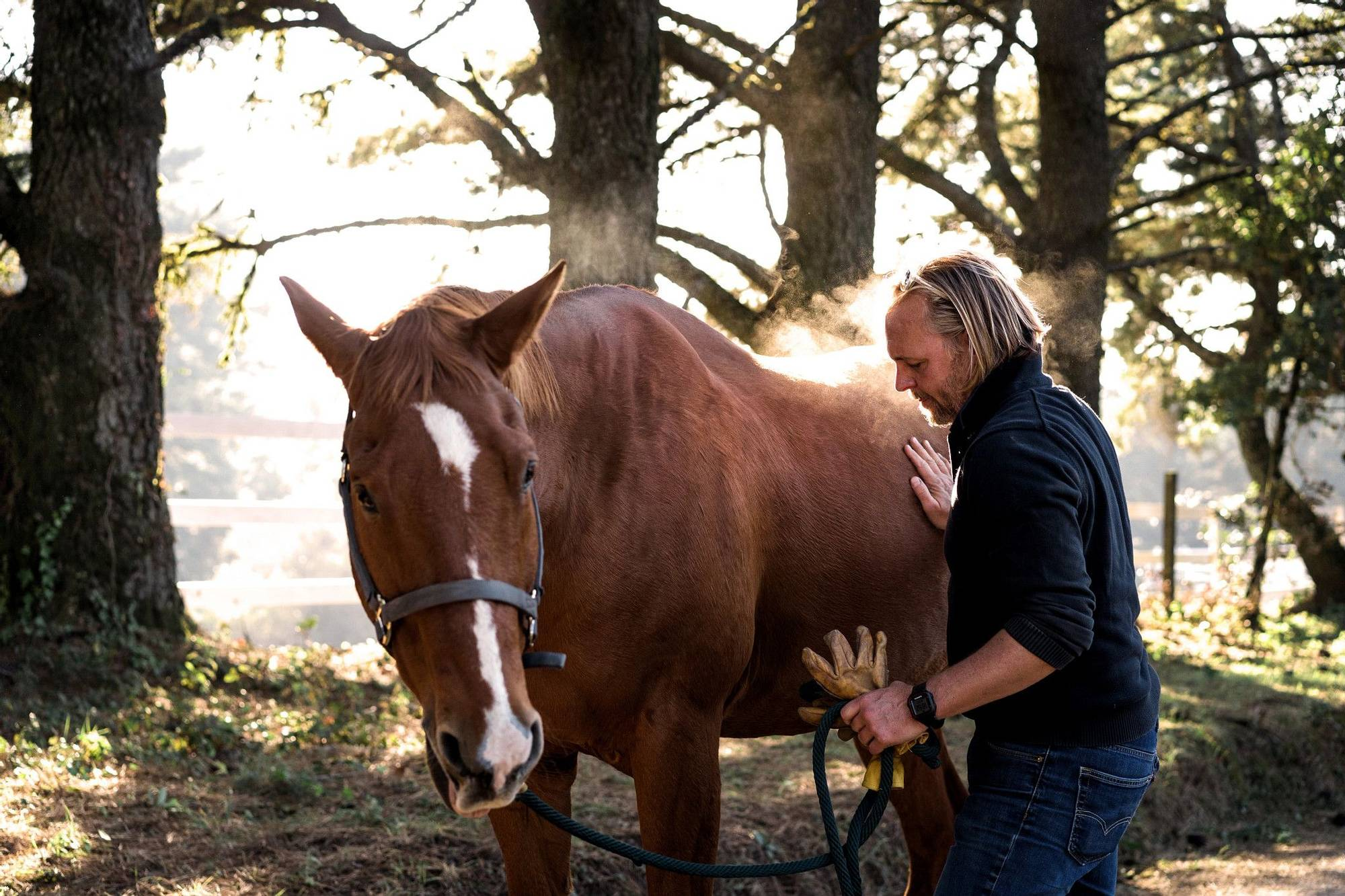 canyon ranch woodside equine therapy