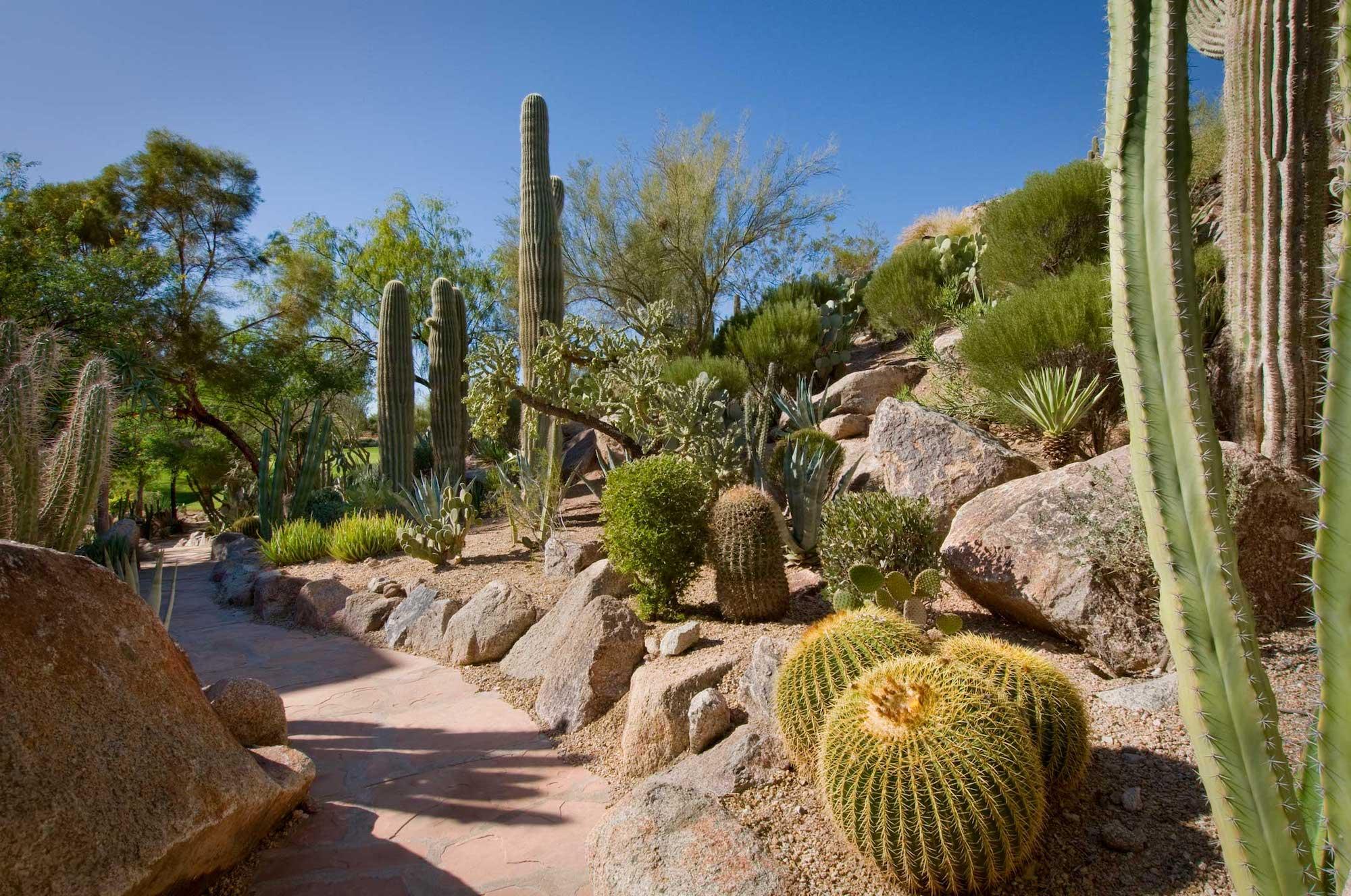 The Phoenician Cactus Garden