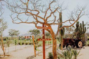 Farm-to-Table Los Cabos El Huerto
