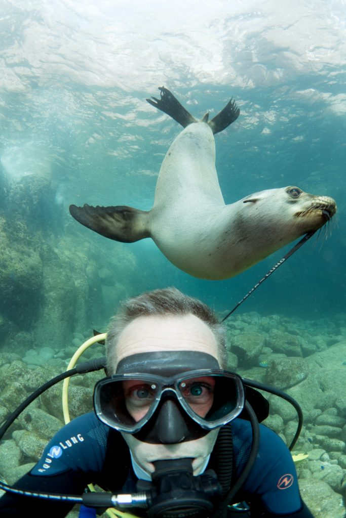 snorkeler enjoying animal encounters with sea lions in mexico